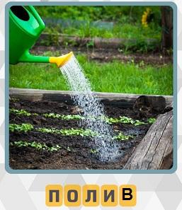зеленой лейкой осуществляется полив растений на грядке водой