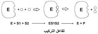 رسم تخطيطي لتفاعل تركيب (بناء)