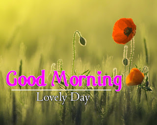 New Good Morning 4k Full HD Images Download For Daily%2B101