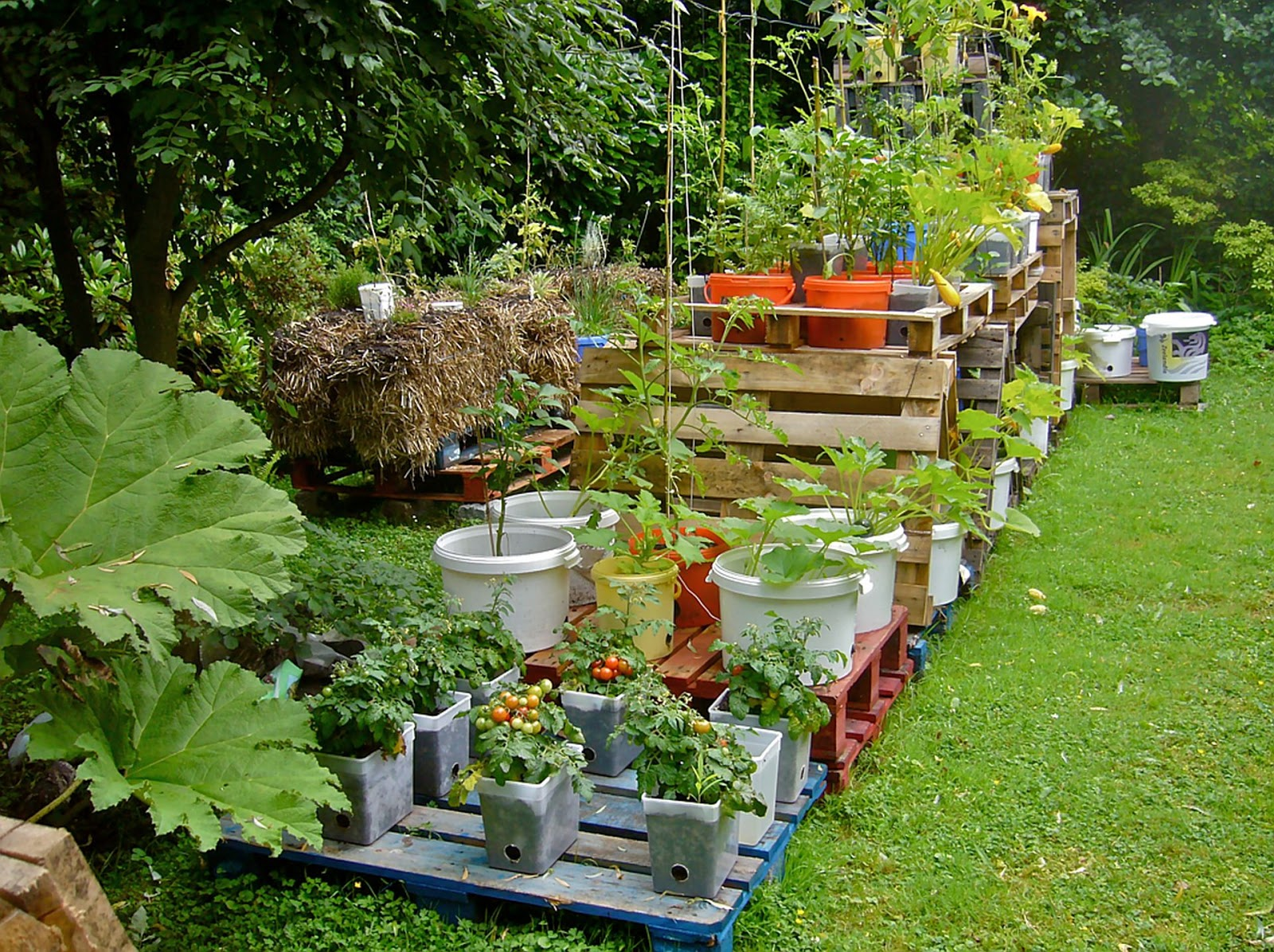 garden layout app interesting images about iphone app shelves on