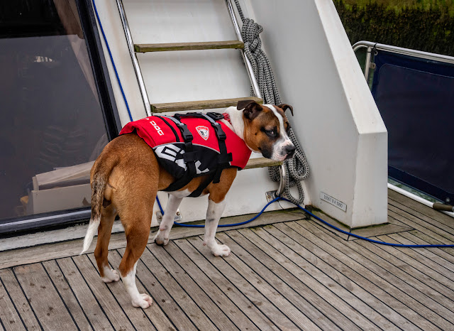 Photo of Ruby wearing her new lifejacket