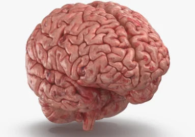 What is Human Brain ? How many facts about Human Brain ?