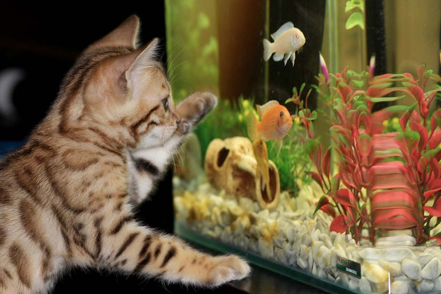 Relish the Calming Effect of an Aquarium