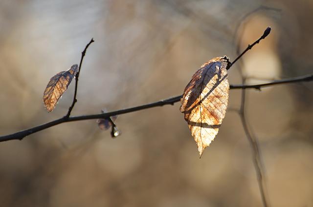 Entre automne et hiver feuille