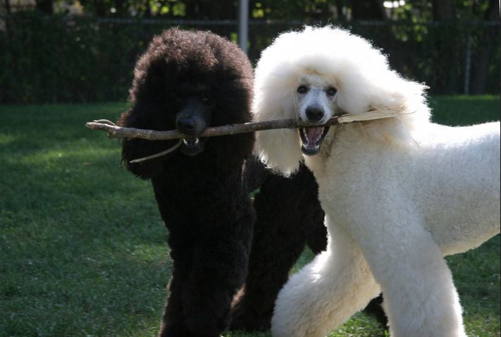 All List Of Different Dogs Breeds Cute Dog Breeds