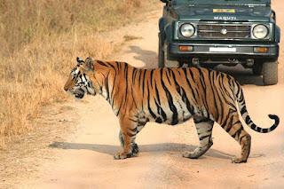 Agencia de viajes en India