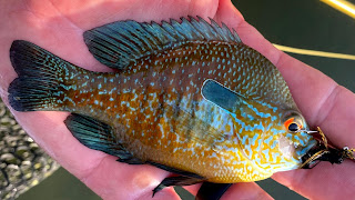 Longear Sunfish on the Fly, Fly Fishing for Longear Sunfish, Texas Hill Country, Hill Country, Fly Fishing the Hill Country, Texas Hill Country Fly Fishing, Fly Fishing Texas, Texas Fly Fishing