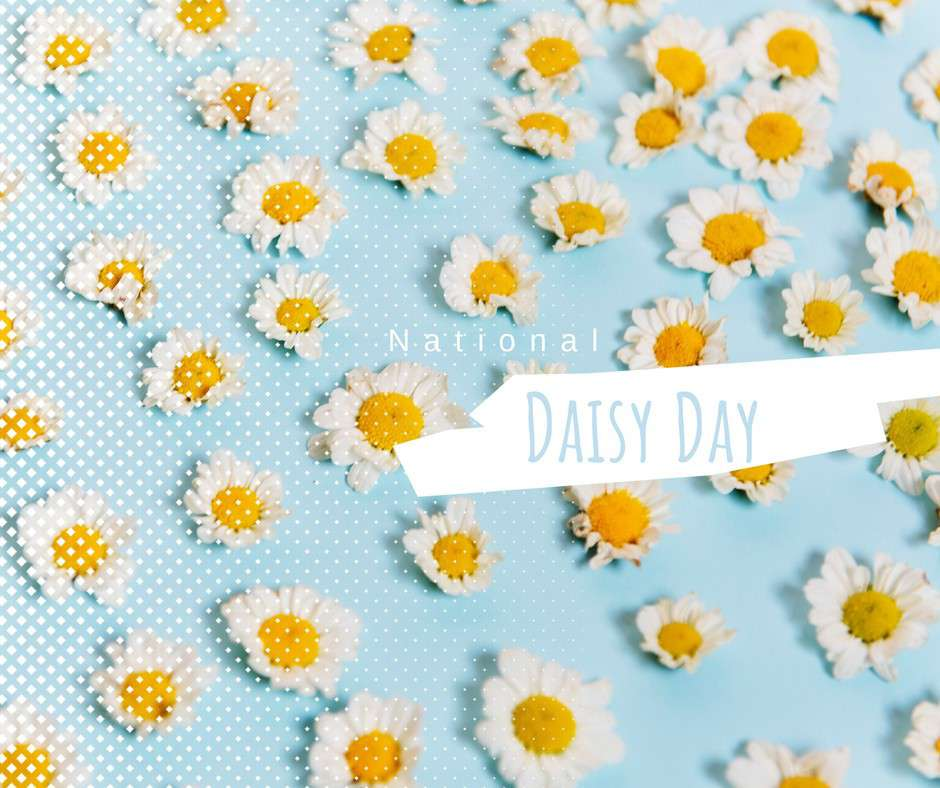 National Daisy Day Wishes Photos
