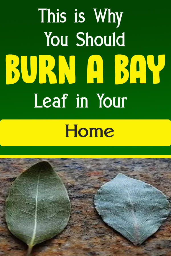 This is Why You Should Burn a Bay Leaf in Your Home