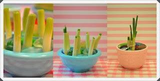 Kapalı Ortamda Yeşil Soğan  Yetiştirmek, Resimli Açıklamalı 2