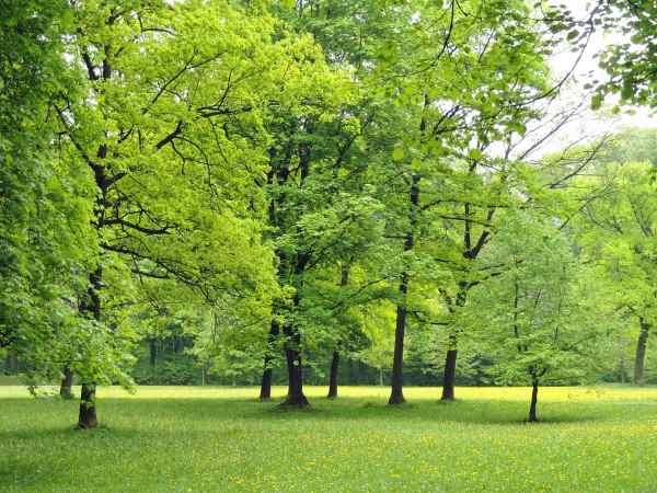 पेड़-पौधों के क्षेत्र में सबसे छोटा और बड़ा  | सामान्य ज्ञान
