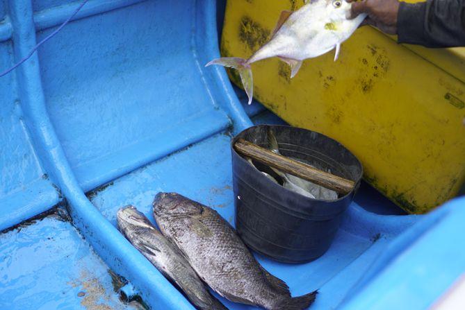 Tangkapan nelayan kala sore hari