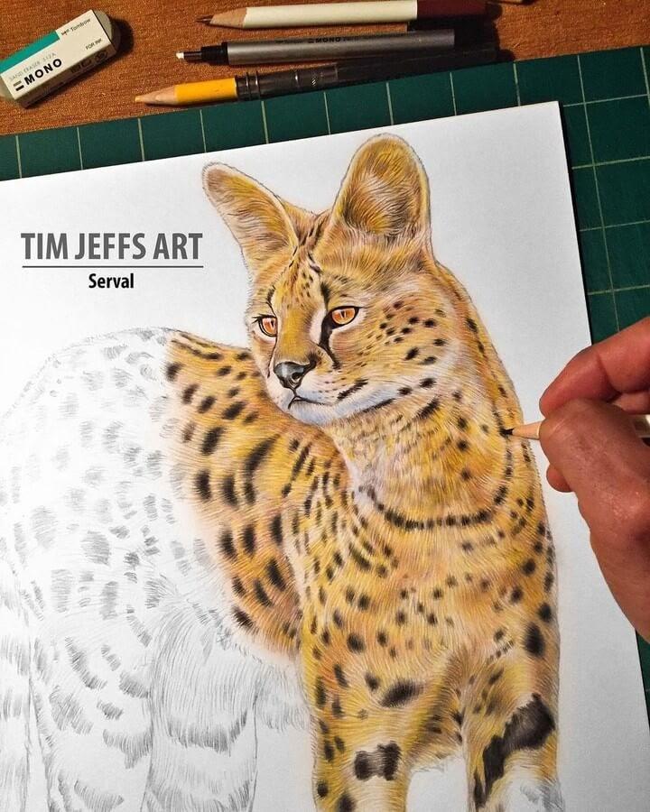 09-Serval-Cat-Tim-Jeffs-www-designstack-co