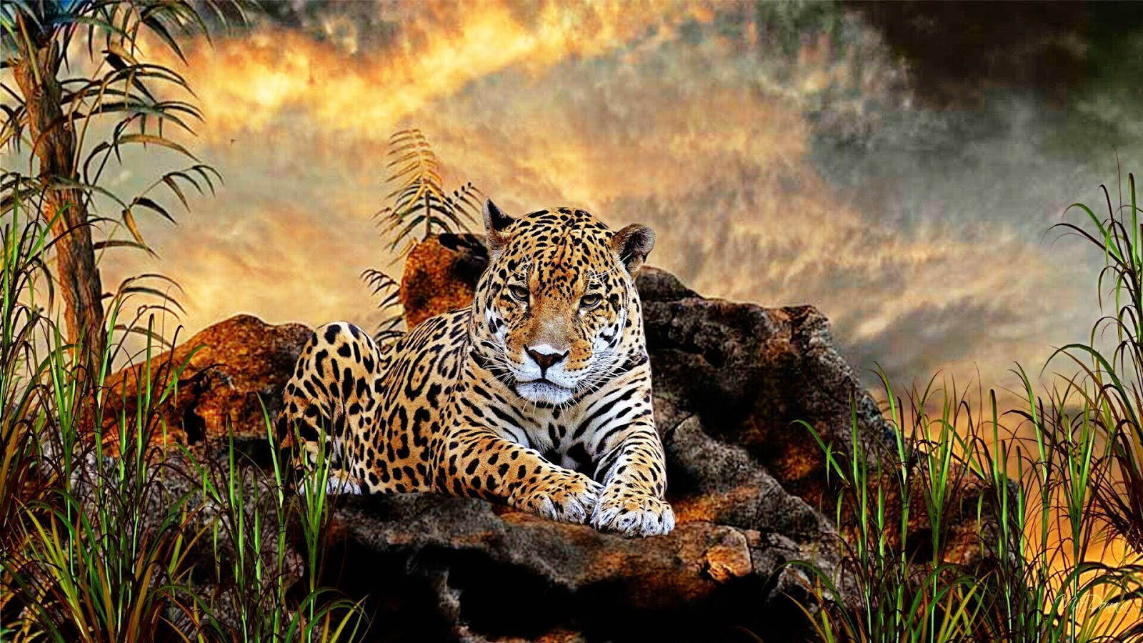 Animals Wallpaper 3d Hd 2 0 Apk Download: Pelestarian Hewan Dan Tumbuhan