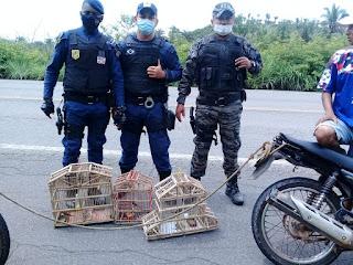 Guarda Municipal de Vargem Grande-MA apreende pássaros em gaiolas na BR-222