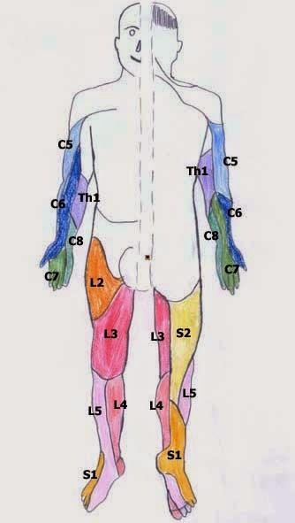 神經皮節圖| - 愛淘生活