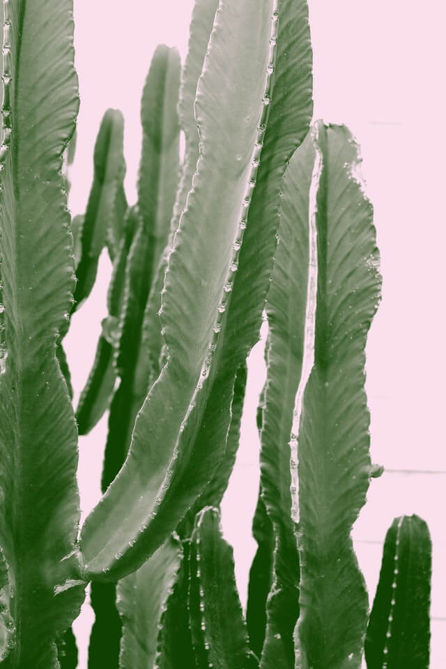 Abstract Botanical Cactus Cactus Plant HD Copyright Free Image