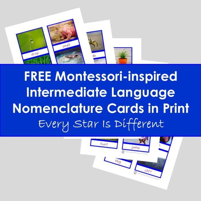 Montessori-inspired Intermediate Language Nomenclature Cards in Print (Free Printable)