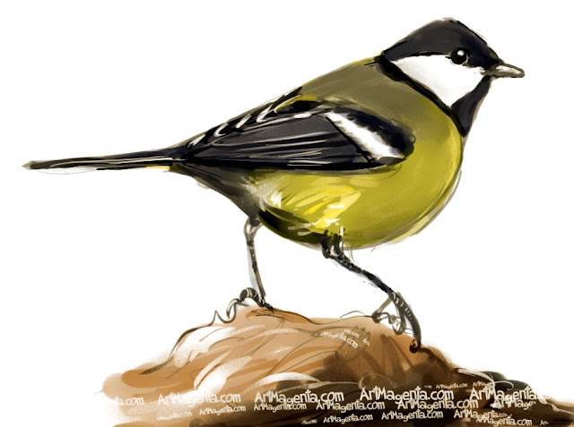Great Tit sketch painting. Bird art drawing by illustrator Artmagenta.