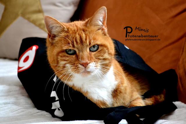Katze Mimi liegt in einer Tasche