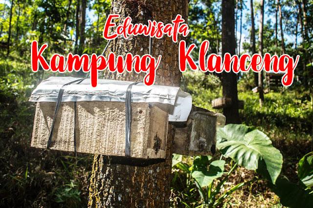 Bercengkerama dengan Lebah serta Menikmati Asam Manis Madunya di Kampung Klanceng Kalipoh