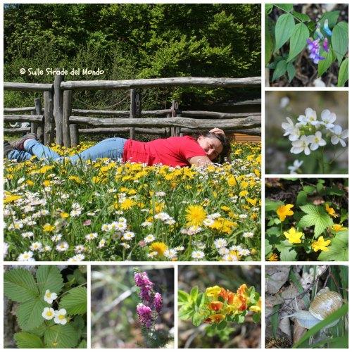 fiori Plitvice