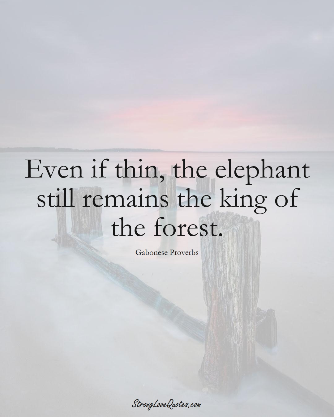 Even if thin, the elephant still remains the king of the forest. (Gabonese Sayings);  #AfricanSayings