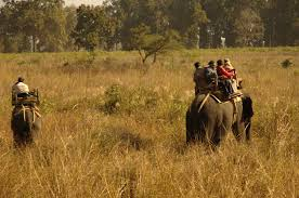kanha park safari ,kanha national paarksafari