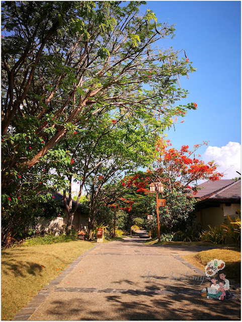 Crimson Resort and Spa Mactan Trees