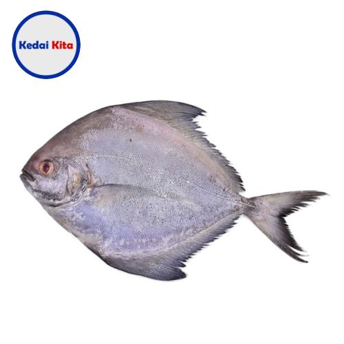 Ikan Bawal 500 Gram