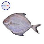 Ikan Bawal Putih  500 Gram