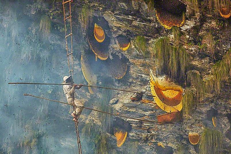 Αποτέλεσμα εικόνας για bee gigiant nepal