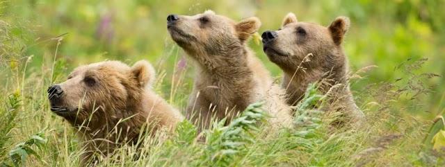 Alaska air service bear viewing