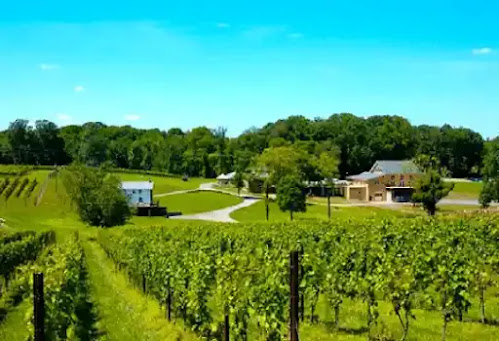 Casanel Vineyards and Winery : things to do in leesburg va this weekend