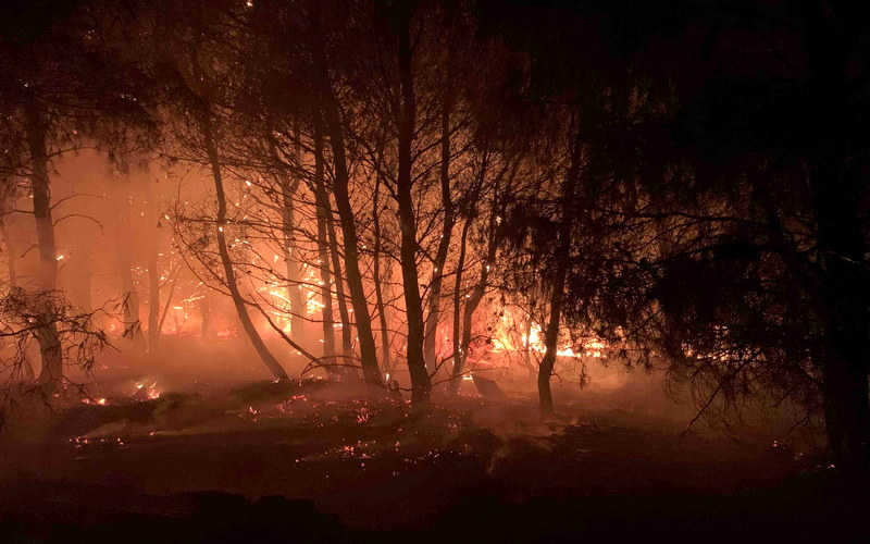 Επιστολή του WWF στον Πρωθυπουργό με 63.000 υπογραφές για πρόληψη δασικών πυρκαγιών