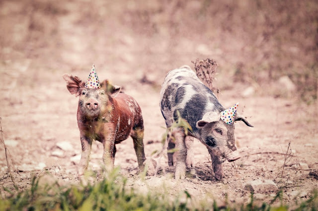 Two pigs wearing birthday hats in dessert.