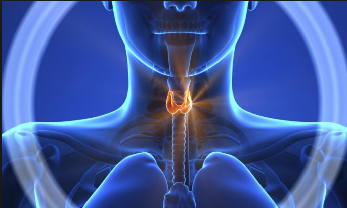 Bad Habits Destroy Your Thyroid