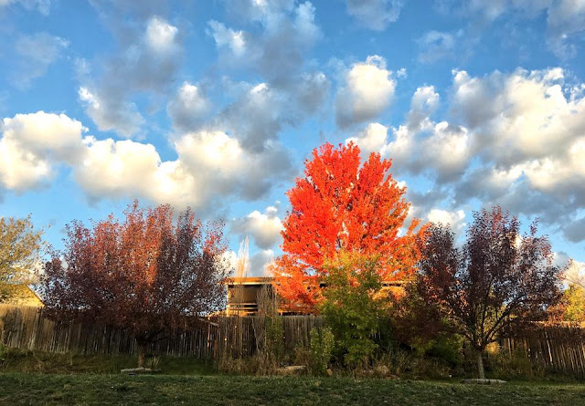 Fall tree, orange, yellow, blue sky, white clouds