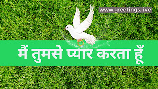 "Green gross background flying Dove with ring I love you in Hindi "" main tumase pyaar karata hoon"""