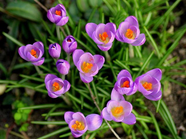 cay hoa nghe tay