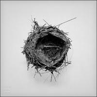 fotografia,nido,naturaleza,limites,variaciones,serie,arte
