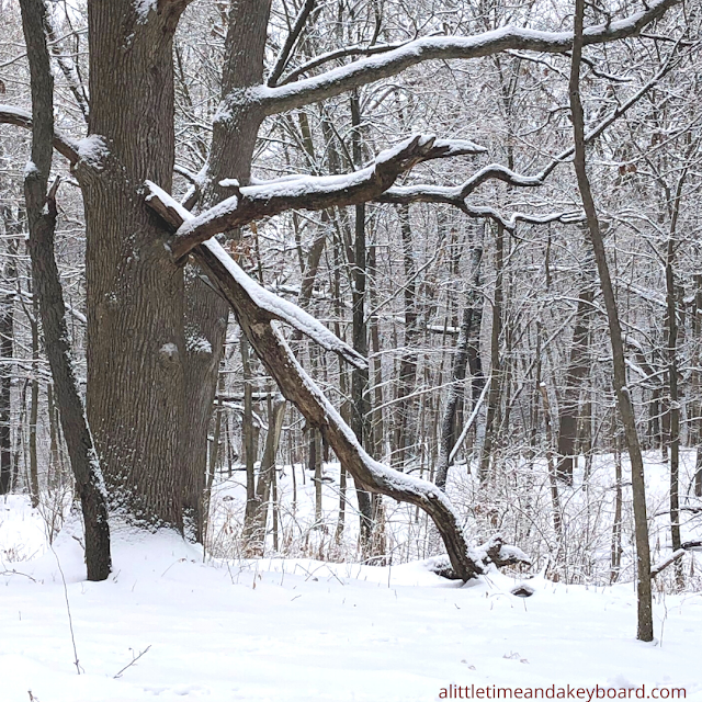 The bones of the forest in winter lead to interesting discoveries of tree formations.