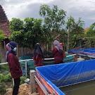 Pulang Merantau, Busro Sukses Budidaya Lele Hingga Puluhan Ribu Ekor