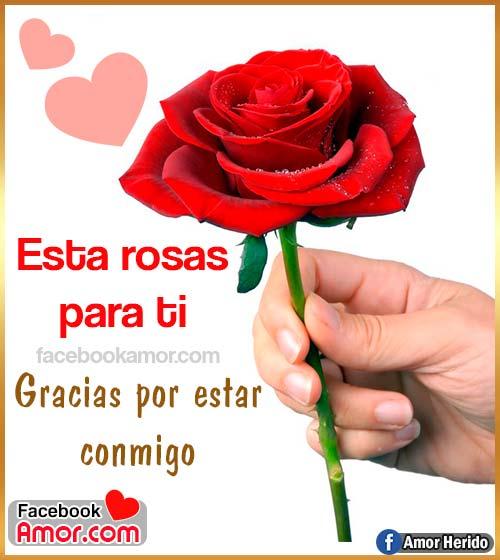 rosa roja amor