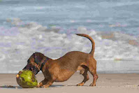 How much coconut can I give my dog?
