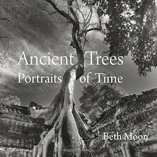 http://www.amazon.com/Ancient-Trees-Portraits-Beth-Moon/dp/0789211955/ref=sr_1_1?ie=UTF8&qid=1452254892&sr=8-1&keywords=beth+moon