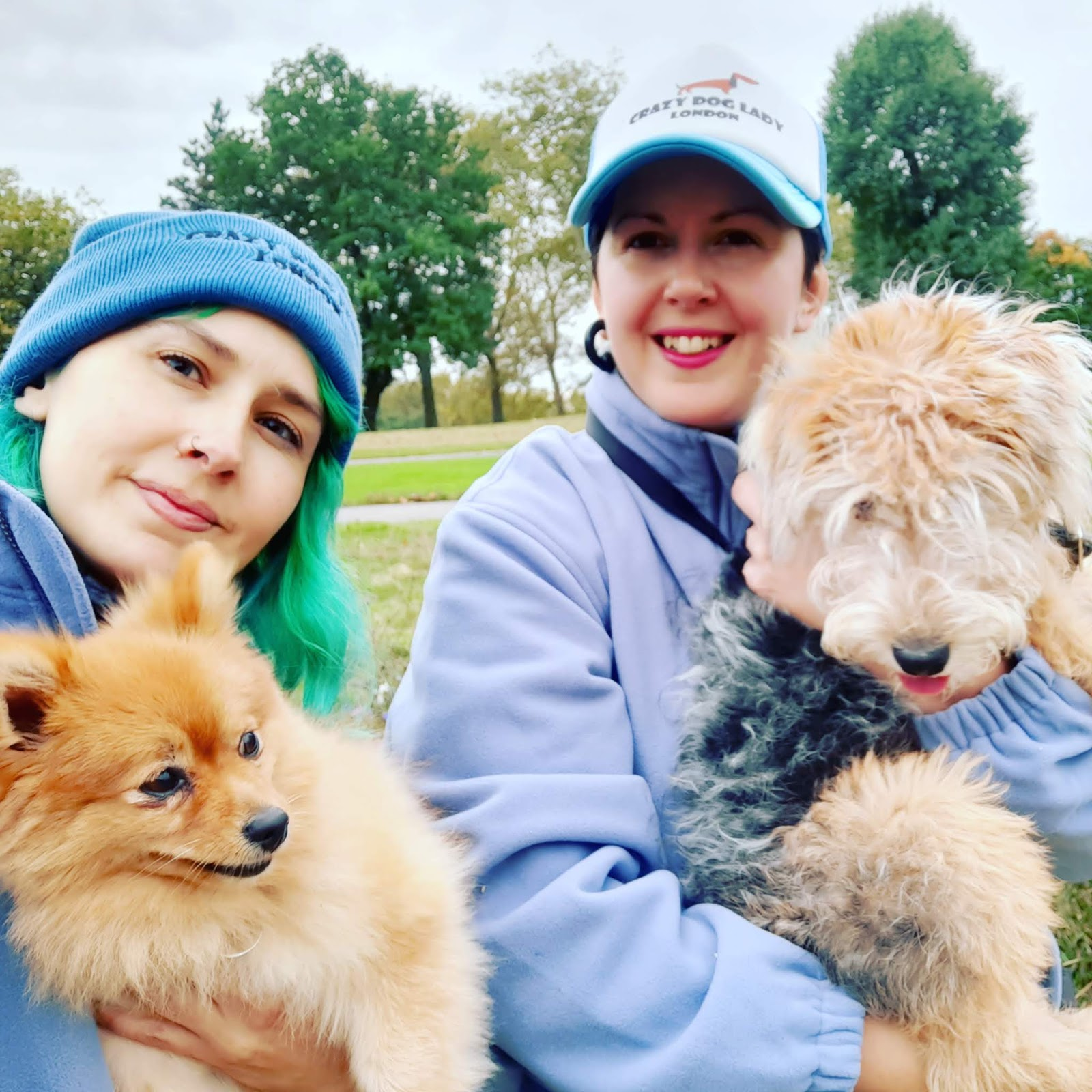 Crazy Dog Lady London Dog Walkers And Sitters In West London