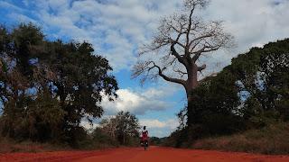https://pedaleandoenlibertadmozambique.blogspot.com.es/