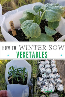 Learn how to make milk jug greenhouses so you can use the winter sowing method to plant flower and vegetable seeds for your spring and summer garden.