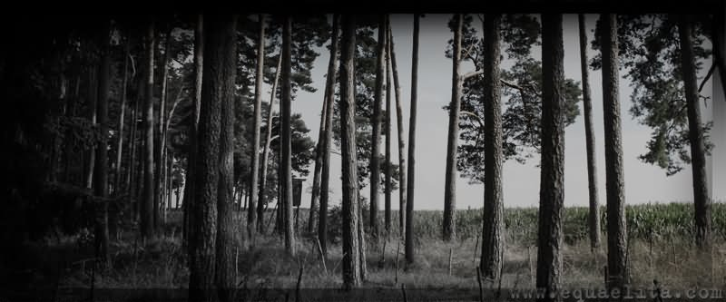 Древние магические деревья